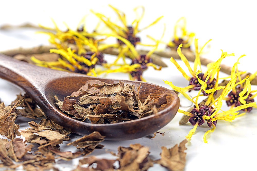 Witch Hazel Benefits for the Skin